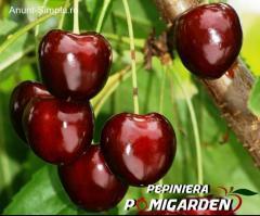 De vanzare pomi fructiferi certificati !!!