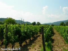vand sau inchiriez teren agricol - 2500mp