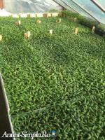 Rasaduri si legume din hibrizi performanti