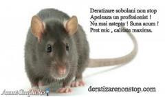 Firma Deratizare non stop