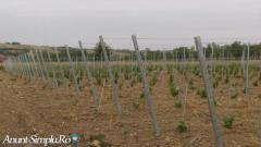 infiintam plantatii pomicole si viticole